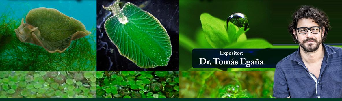 """""""Homo Fotosintética"""" El desarrollo terapéutico potencial de animales y plantas vertebradas."""