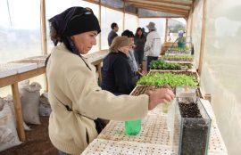 Productoira de hortalizas, dentro de un invernadero, revisa los brotes de un cultivo hidropónico.