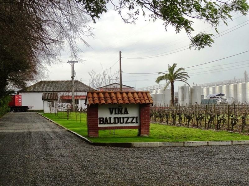 Viña Balduzzi de San Javier reconocida por su calidad de vinos