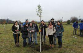 Tomasinos participan en campaña de arborización en Osorno