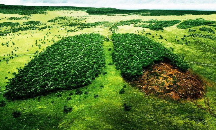 Por qu hay personas que no cuidan el medio ambiente for Medio en el que habitan los arboles
