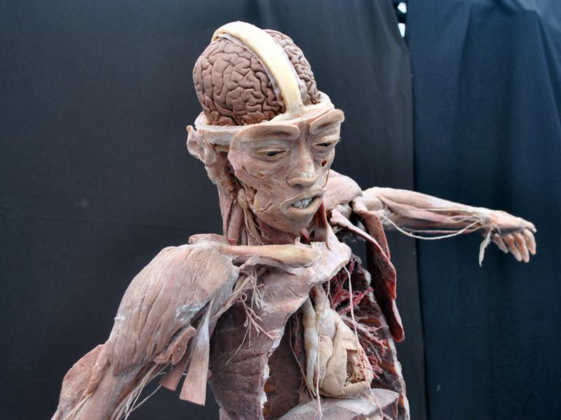 BODIES 2.0: cuerpos humanos reales\