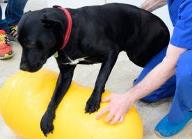 La importancia de la rehabilitación y fisioterapia en nuestras mascotas