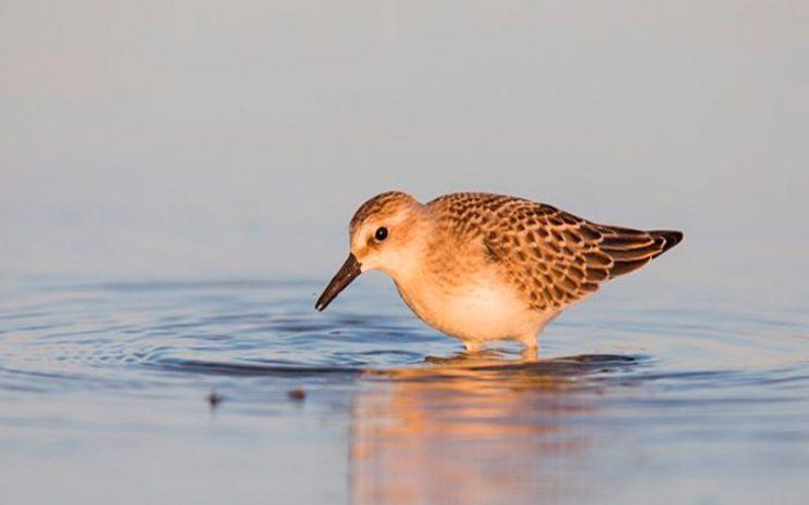 Patrones-macroecologicos-en-la-fauna-de-aves-nidificantes-de-Chile