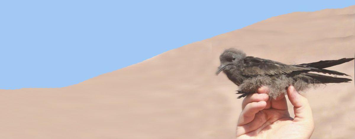 aves del desierto