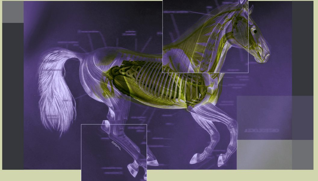 morfologia-veterinaria-