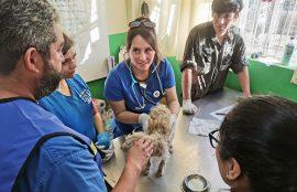 Enfermería. Medicina Veterinaria. Servicio Social. Psicología