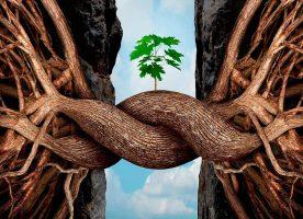 resiliencia-arbol